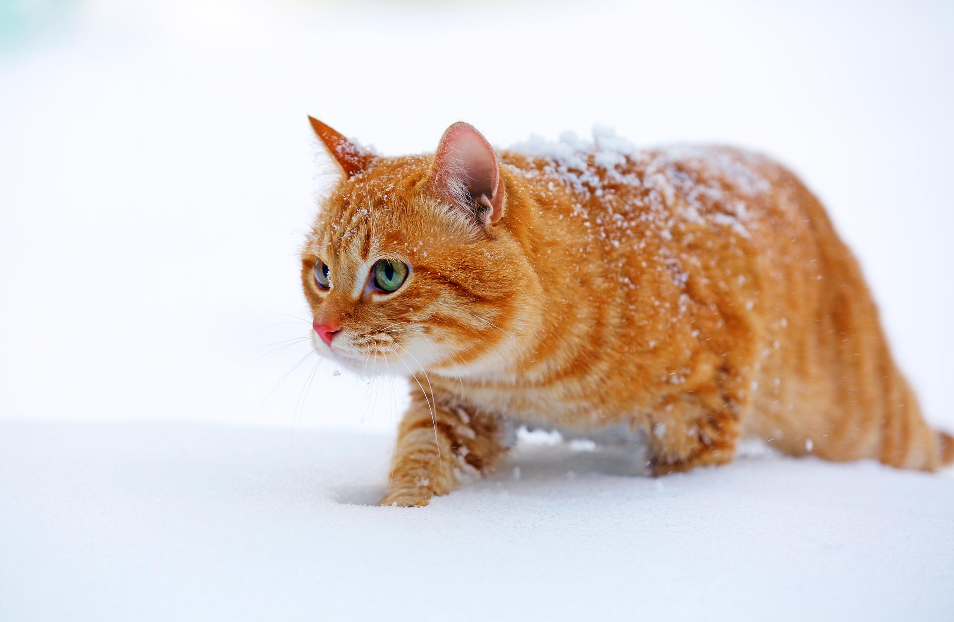 03_red cat - 1920-1250