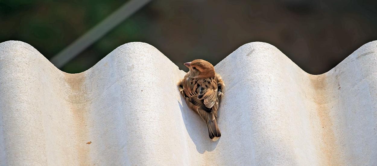 Птица, летящая на свет (дверь на чердак)