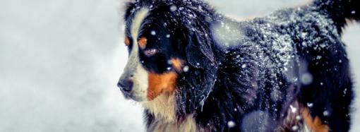 Собака и тереза