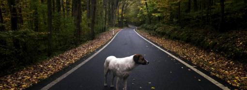 И вдруг — дорога