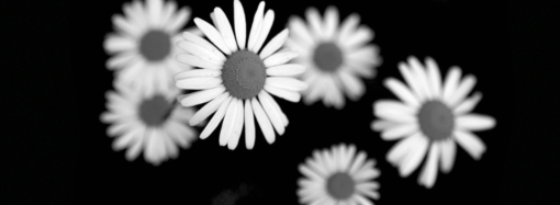 Цветы для карлы (очень)