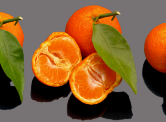 Любовь к четырём апельсинам