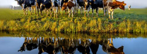 Молоко, воды и травы