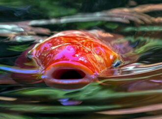 Рыбы троеборья